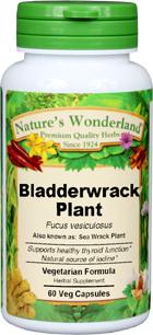 Bladderwrack Capsules - 800 mg, 60 Veg Capsules (Fucus vesiculosus)