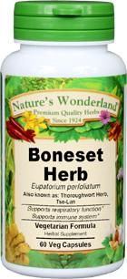Boneset Herb Capsules - 400 mg, 60 Veg Capsules (Eupatorium perfoliatum)