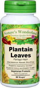 Plantain Leaf Capsules - 475 mg, 60 Veg Capsules (Plantago major)