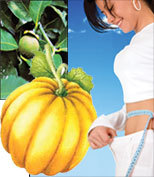 Garcinia Cambogia Standardized Extract - 425 mg, 60 Veg Capsules each
