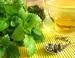 Lemon Balm Herb, Powder, 1 oz  (Melissa officinalis)