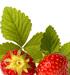 Strawberry Leaves, Cut, 4 oz (Fragaria vesca)