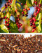 Wild Cherry Bark, Cut, 4 oz (Prunus serotina)
