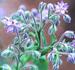 Borage Herb, Cut, 1 oz (Borago officinalis)