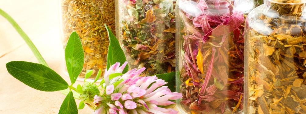 Organic herbs, spices & essential oils - Penn Herb Co  Ltd ]