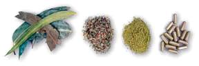 Penn Herb Herb Forms